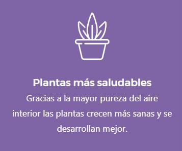 01-plantas